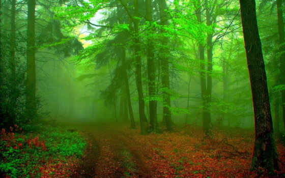 природа, лес, дорога, красивые, пейзажи -, trees, листьями, уходящая, тропинка, туман, грунтовая,