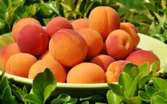 фрукты, абрикос, ягоды,