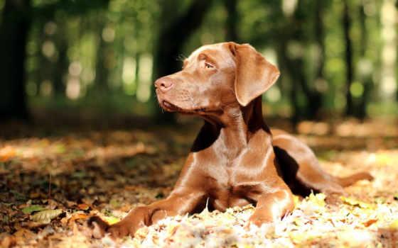zhivotnye, страница, собаки, картинку, телефон, grooming, кот, free, природа, одышка,