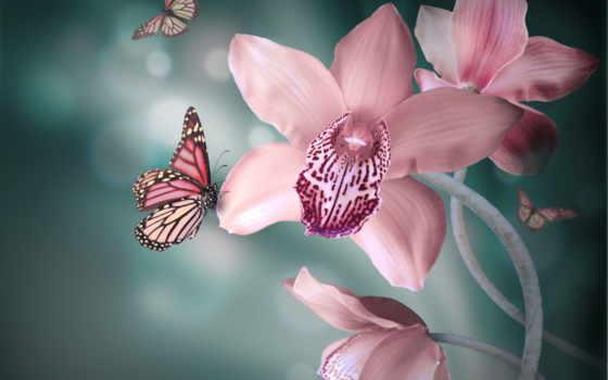 орхидеи, орхидея, cvety, розовые, бабочка, лепестки