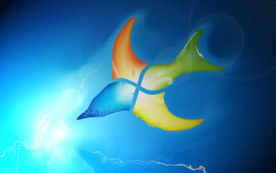 windows, se7en, swallow, bird