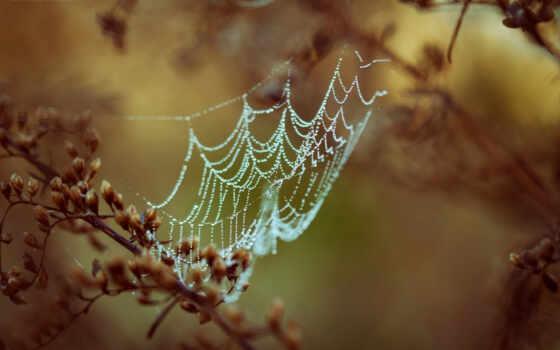 web, spider, dew