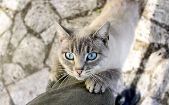кот, глаза, животных
