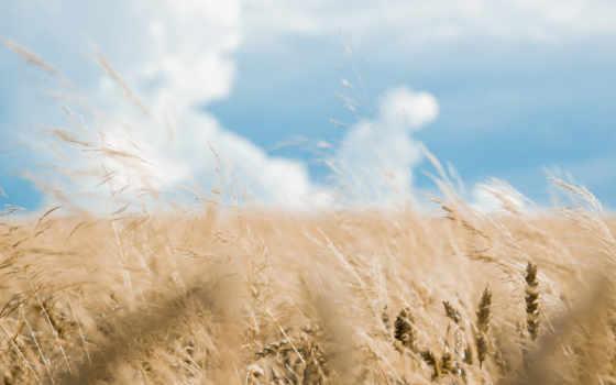 поле, небо, природа