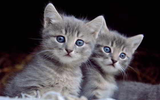 кот, cute, visual
