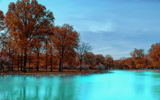 осень, trees, park