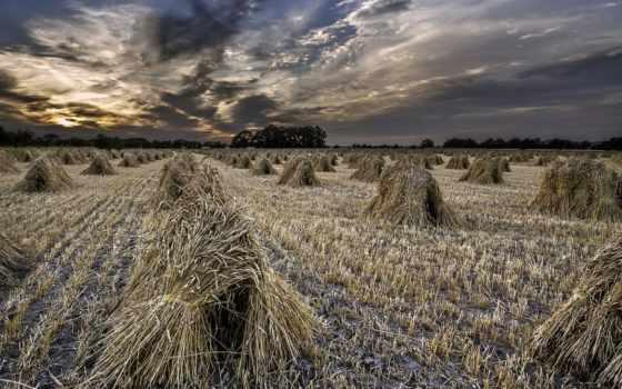 природа, поле, пшеница, страница, закат,