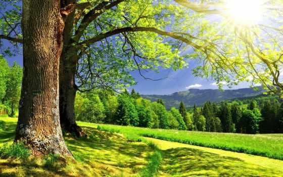 summer, природа, landscape, природы, лес, красивые, zhivotnye, широкоформатные, заставки,