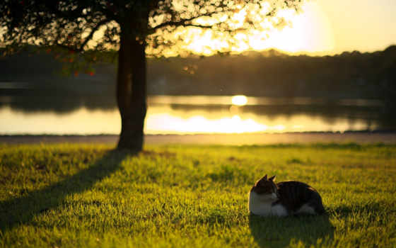 кошки, лучшая, коллекция, загружено, уже, небо, природа, зеленой, sun, разное,