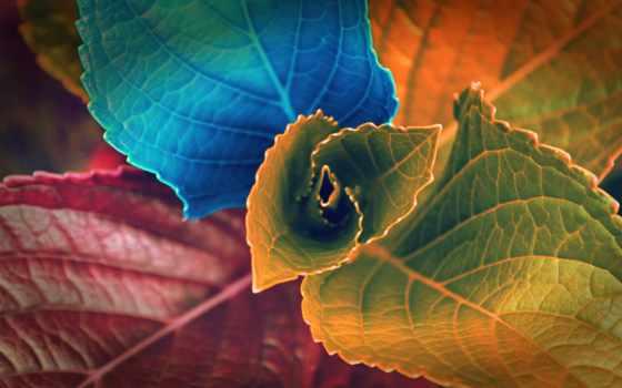 листья, colorful, size, our, можно, абсолютно, сайт, наши,
