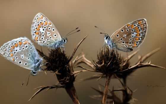 бабочки, cvety, макро
