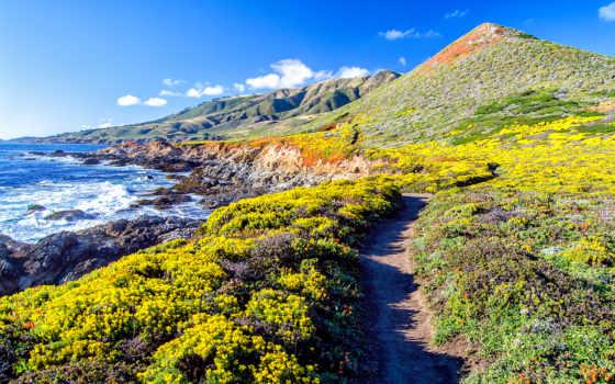 море, природа, горы, cvety, mustang, ocean, ford,