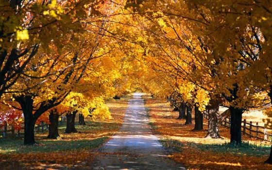 осень, деревья Фон № 12101 разрешение 1920x1200