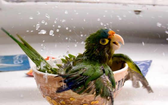 попугай, попугая, geographic