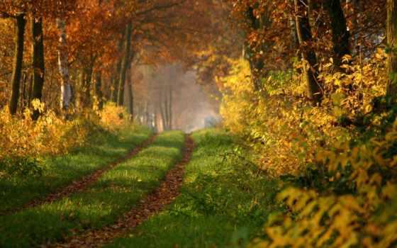 les, осенний, дорога, осень,