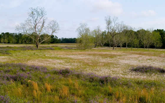 priroda, les, трава