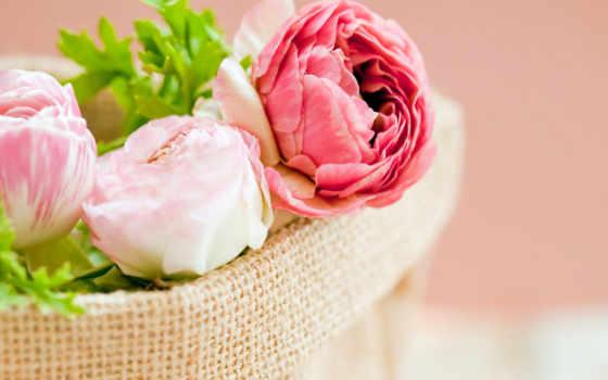 пионы, цветы, розовые,