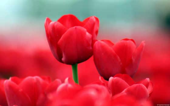 цветы, samsung, flowers