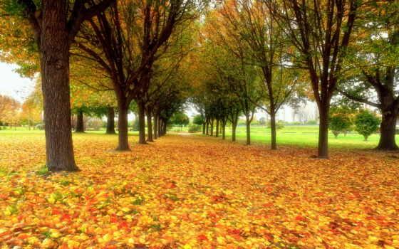 природа, осень, park, листва, широкоформатные,