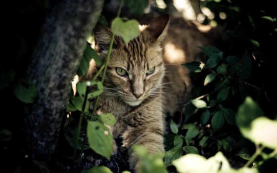 shadow, кот, cats, photos, zozo, images, high, zhivotnye, отдых,