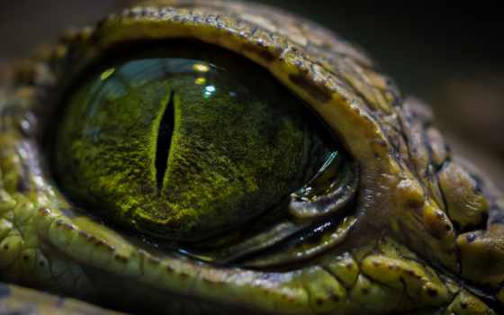 глаз, reptile, рептилии, дешевые, картинку, aliexpress, оптом, крокодил,