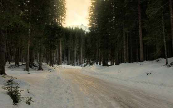 winter, лес, снег, ёль, хвойные, trees, дорога, трек, traces, поворот,