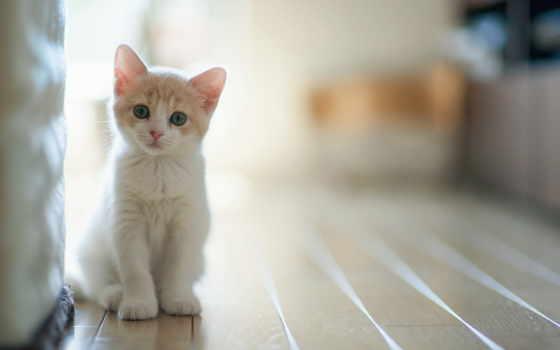 gato, para, los, gatos, cromosomas, por, sobre,