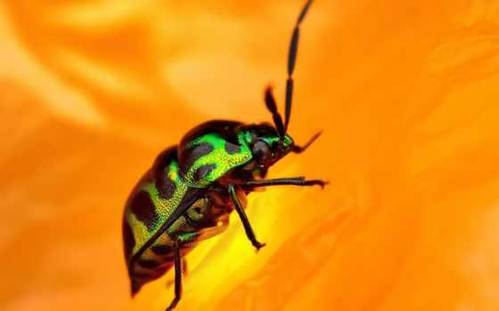 dsc, photos, насекомые, kong, насекомых, страница,