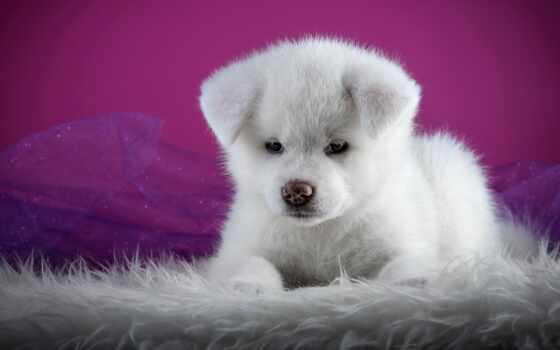 щенок, white, собака, коллекция, cute, animal, user, интересно, favourite