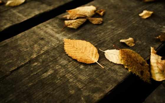 листья, скрипт, сайта