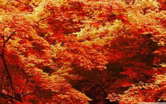 лес, листья, деревья