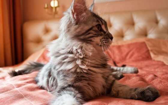 котенок, zhivotnye, природа, открытки, оранжевый, кот, animals, clockwork,