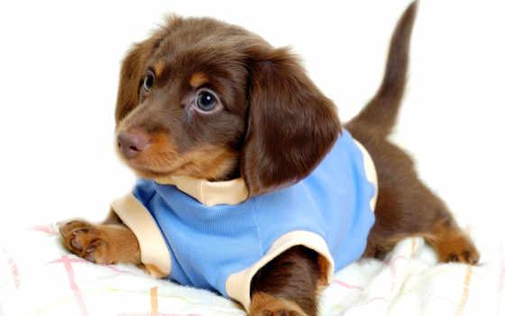 щенок, nice, small, дек, янв,