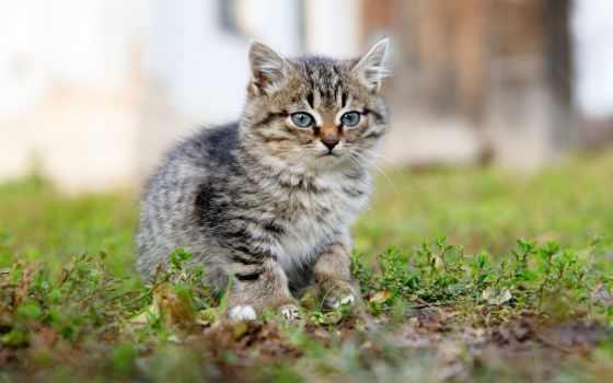 кот, котенок, тематика, abyss