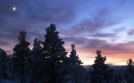 wallpaper, sunset, northern, пейзаж, пейзажи, морозный, wallpapers, северной, зимнее, швеции, сиреневое, синее, лес, деревья, winter, швеция, desktop, scenery, holodnaja,