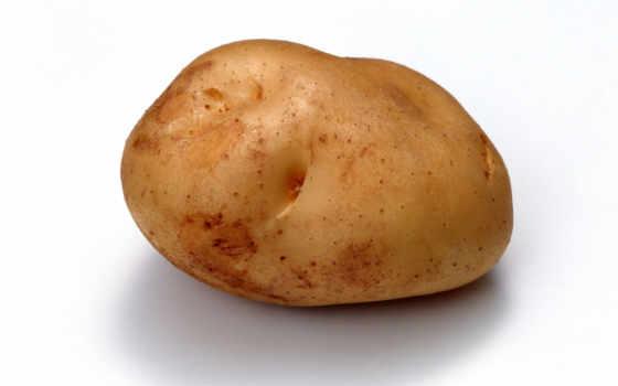 potato, гр
