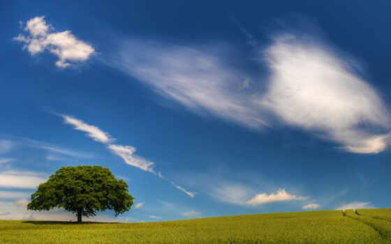 поле, пейзажи
