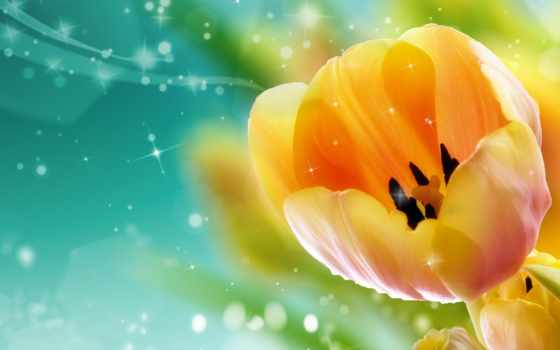 тюльпаны, cvety, бутон