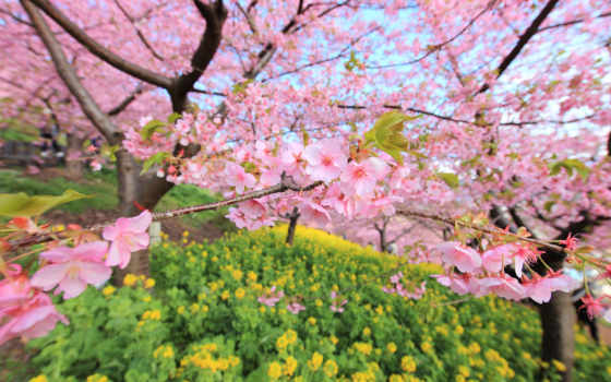 весна, красивые, марта