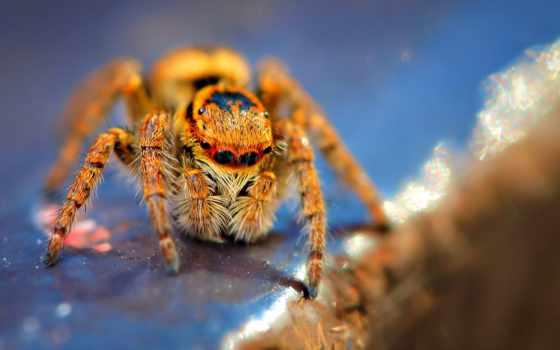 spiders, паук, коллекция