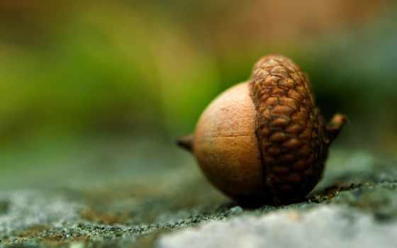 acorn, макросъемка, макро, извилины, браун, getbg, full,