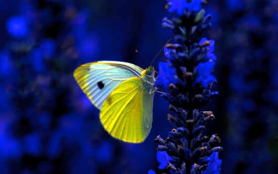 природа, макро, страница, cvety, бабочка, красивых, разрешений, высоком, красивые,