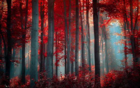 лес, favourite, природа, осень, getbg,
