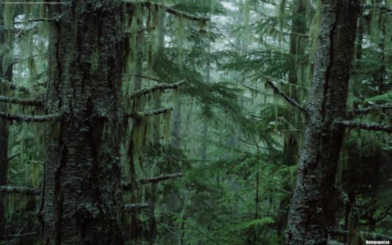 лес, trees, природа, лесная, туман, категории, великолепные,