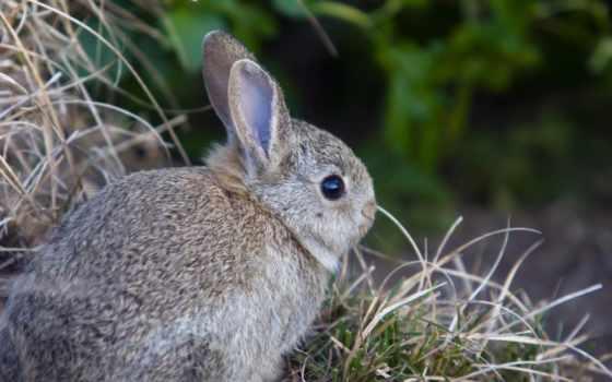 животные, rabbit