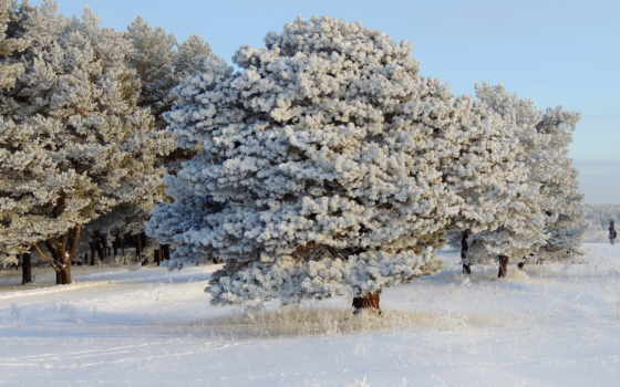 природа, деревья, взгляд, дома, снег, winter, животные, года, красавица, смотреть, размере, обою, времена, истинном,