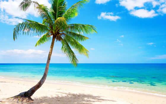 море, тропики, пляж, tropical, palm, рай, summer, ocean, emerald,