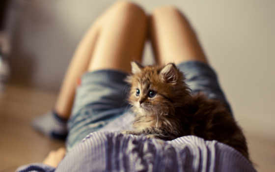 devushki, девушка, котенок