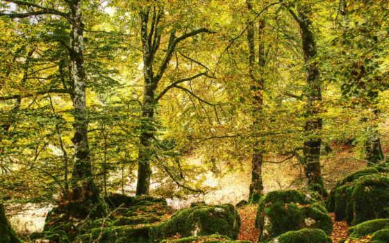 деревя, листья, лес