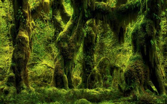 лес, ferns, природа, мох, trees, plants, дерево,